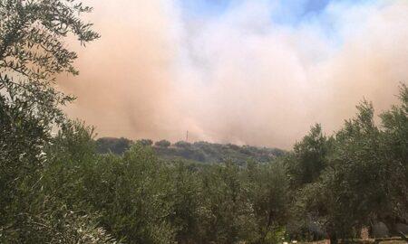 Yπό έλεγχο η πυρκαγιά στην Κορώνη- Στάχτη 35 στρέμματα με ελιές!