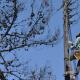 Διακοπή ρεύματος σε Αρφαρά και Κορώνη