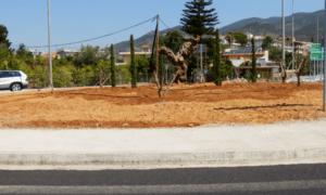 Δέντρα και αρωματικά φυτά στους κόμβους Αρτέμιδος και Αθηνών