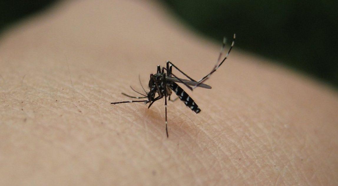 ΚΕΕΛΠΝΟ: Σε χωριό της Αργολίδας το πρώτο για φέτος επιβεβαιωμένο κρούσμα ιού Δυτικού Νείλου