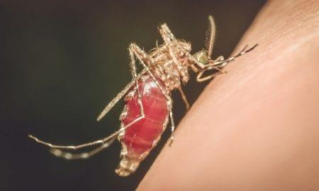 ΚΕΕΛΠΝΟ: 24 τα κρούσματα από τον ιό του Δυτικού Νείλου – Πρωταγωνίστρια η Αργολίδα