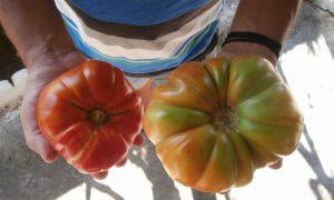 12η Γιορτή Χοντροκατσαρής Ντομάτας και Κρεμμυδιού στη Μεταμόρφωση στις 6 Αυγούστου