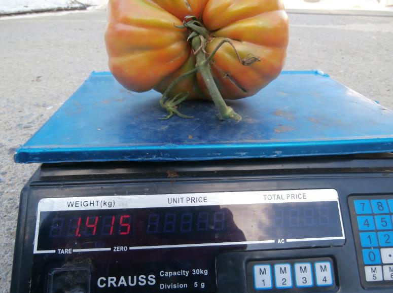 10η Γιορτή Χοντροκατσαρής Ντομάτας στη Μεταμόρφωση