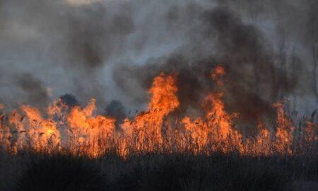 Φωτιά μαίνεται στη Μεγαλόπολη