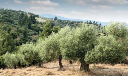 Στο ταμείο από τον Οκτώβριο 650.000 αγρότες για 2,7 δισ. ευρώ