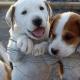Τι δηλώνει ο Δήμος Καλαμάτας για τη διαχείριση των αδέσποτων ζώων