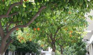 Nεραντζιές και όχι φωτίνιες θέλουν στη Θεμιστοκλέους οι περίοικοι