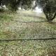 Τριφυλία: Μεγάλη η καταστροφή σε ελιές και υπαίθρια λαχανικά από το χαλάζι