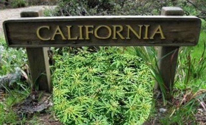 Η Καλιφόρνια νομιμοποιεί την αγορά και πώληση κάνναβης