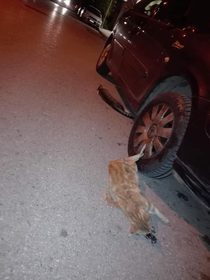 """Φόλες """"θέρισαν"""" τις γάτες στο Νησάκι!"""