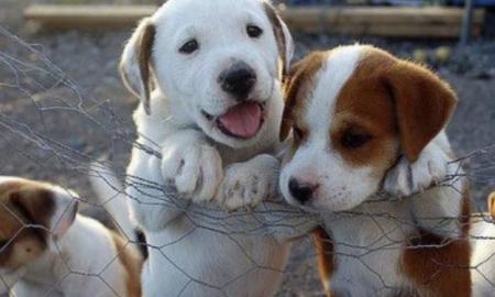 Συνολικά 54.800 ευρώ στους Δήμους Καλαμάτας-Μεσσήνης και Τριφυλίας για τη λειτουργία καταφυγίων αδέσποτων ζώων