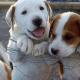 Σύμβαση για κτηνιατρικές υπηρεσίες σε αδέσποτα στο Δήμο Καλαμάτας