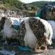 Τη συνεργασία όλων ζητά ο Νίκας για τα σκουπίδια-Τι λέει η ανακοίνωση του Δήμου