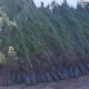 Καλαμάτα: Έφτασαν τα πρώτα 1.500 πεύκα- Που θα φυτευτούν