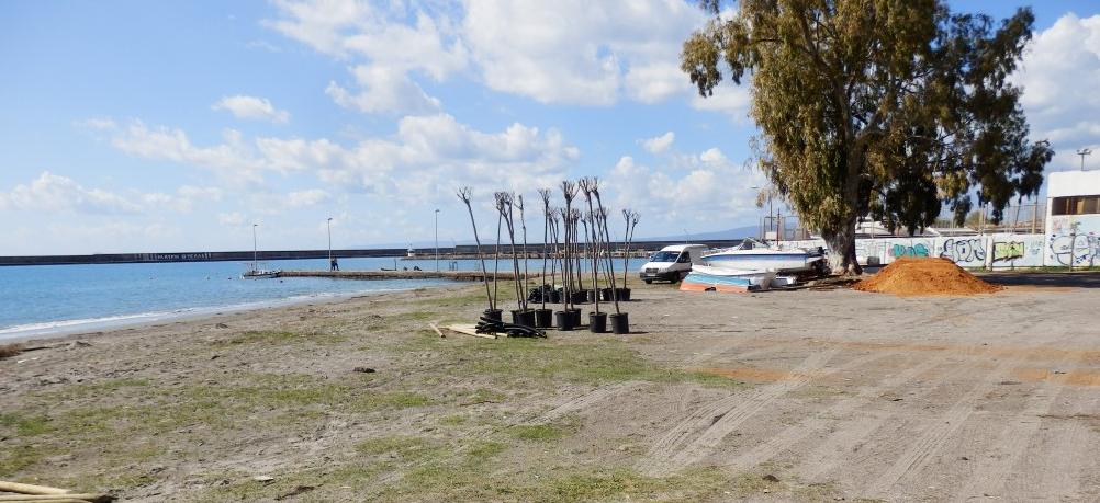Φυτεύονται αλμυρίκια στην παραλία Καλαμάτας