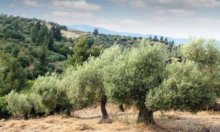 Δήλωση Βαγγέλη Αποστόλου για τον Α.Τ.ΑΚ. στις αιτήσεις των αγροτών