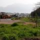 Δήμος Καλαμάτας: Συνεχίζονται οι φυτεύσεις δέντρων