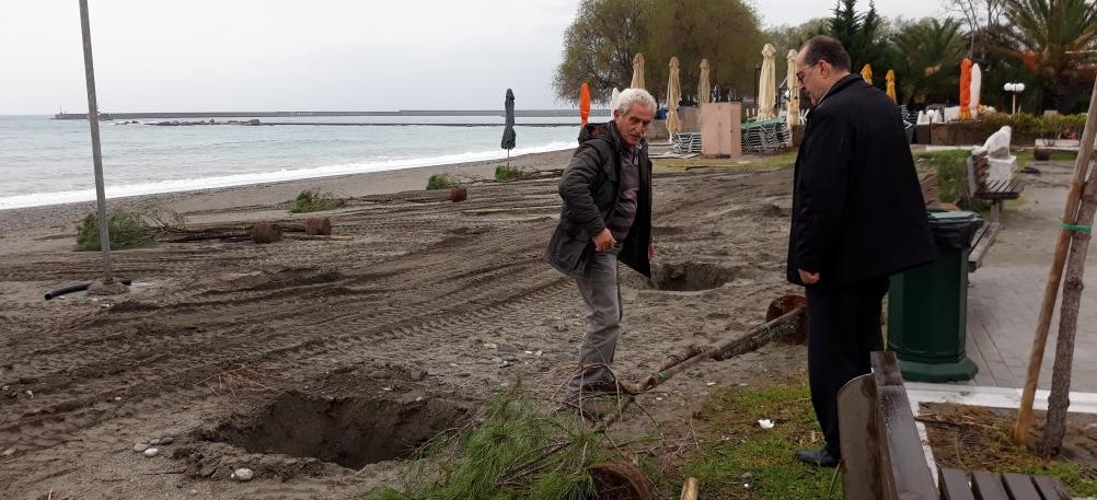 Φυτεύτηκαν τα πρώτα πεύκα στην Παραλία απέναντι από την Ανάσταση