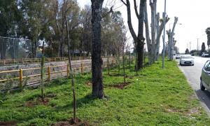 """Νίκας: """"Θα φυτευτούν 10.000 δέντρα σε όλη την πόλη"""""""