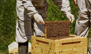 Κέντρο Μελισσοκομίας Πελοποννήσου και στην Καλαμάτα
