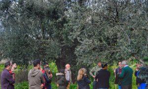 ΚΑΕΜ: Περισσότεροι από 200 οι καταρτιζόμενοι στον Αγροτουρισμό
