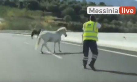 Δύο άλογα βγήκαν… βόλτα στον περιμετρικό Kαλαμάτας!