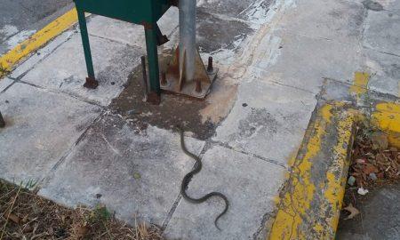 Φίδι ενός μέτρου εμφανίστηκε στο πάρκινγκ της Αγοράς!
