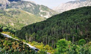 Πυροσβεστική Καλαμάτας: Απαγορεύεται από 1η Ιουλίου η κυκλοφορία στις δασικές περιοχές της Μεσσηνίας