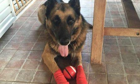 Βρήκε οικογένεια το σκυλάκι με τις καμένες πατούσες από τη φωτιά στο Μάτι