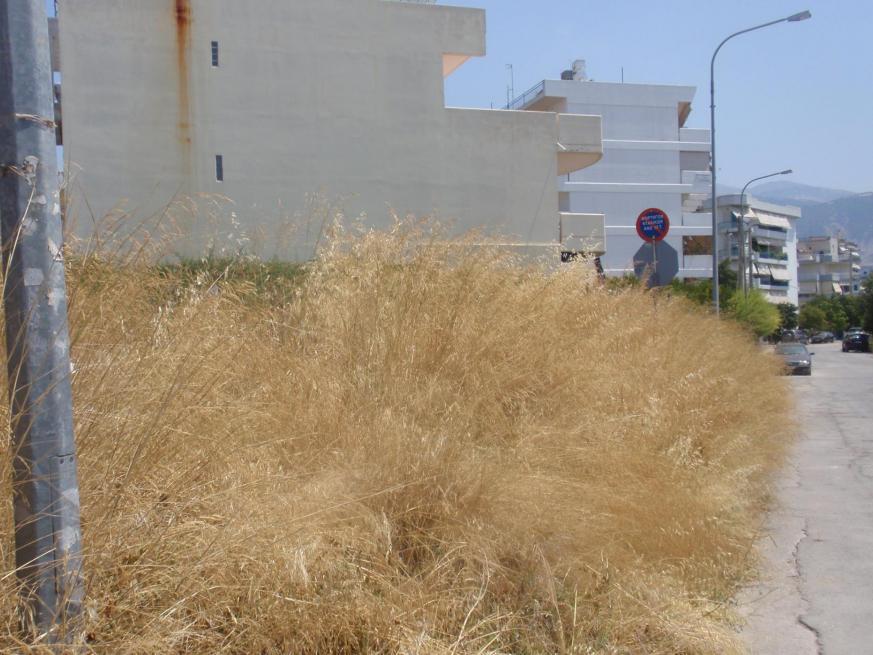 Στον Εισαγγελέα προσέφυγε ο Δήμος Καλαμάτας για τον καθαρισμό ιδιωτικών οικοπέδων