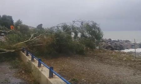 Μαντίνεια: Έκλεισε ο δρόμος από πτώση δέντρου