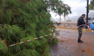 Έπεσε δέντρο στη Μαντίνεια
