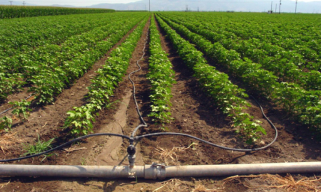 Μειωμένο αγροτικό τιμολόγιο: Παράταση υποβολής δικαιολογητικών έως το τέλος Μαϊου 2019