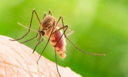 ΚΕΕΛΠΝΟ: Ο ιός του Δυτικού Νείλου έχει μολύνει 28.000 ανθρώπους!