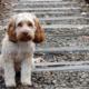 H θέση της Λαϊκής Συσπείρωσης Καλαμάτας για τα ζώα συντροφιάς