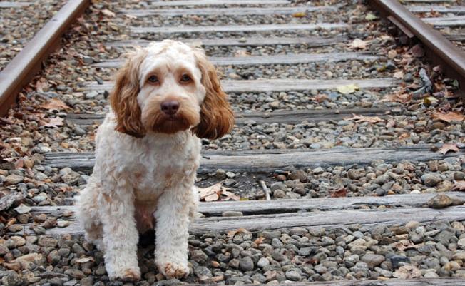 Διαδημοτικό Κυνοκομείο στη Μεσσήνη: Καταφύγιο για αδέσποτα ζώα των Δήμων Καλαμάτας και Μεσσήνης