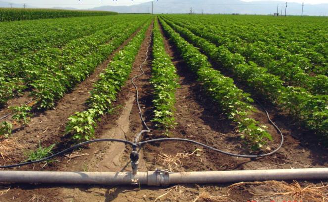 Από 1η Νοεμβρίου το Υπουργείο παραχωρεί εκτάσεις σε κατ'επάγγελμα αγρότες και ανέργους