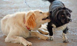 Φιλοζωικός: Οι ανεξέλεγκτες γέννες δημιουργούν τις αγέλες σκύλων