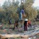Πετράκος: Τρία χρόνια το τρίτο μνημόνιο, δύο χρόνια κατεστραμμένοι οι ελαιοπαραγωγοί