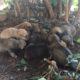 Η σκυλίτσα του Δημαρχείου γέννησε και χαρίζονται τα κουταβάκια της