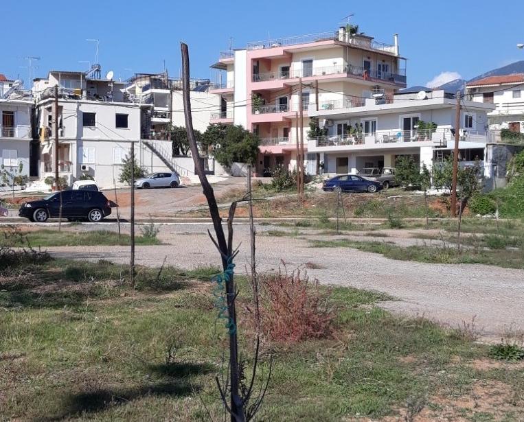 Άγνωστοι κατέστρεψαν τα πευκάκια στην πλατεία Φραγκοπήγαδου