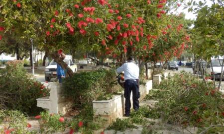 Δήμος Καλαμάτας: 250€ πρόστιμο στους ιδιοκτήτες για κλαδιά που προεξέχουν στους δρόμους
