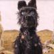 Νέα Κινηματογραφική Λέσχη Καλαμάτας: Το νησί των σκύλων