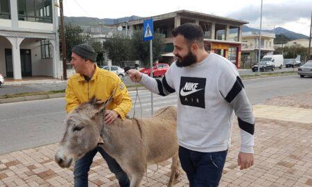 Γάϊδαρος βγήκε βόλτα στην Αρτέμιδος-Τον Φιλοζωικό ειδοποίησαν οδηγοί του Αστικού ΚΤΕΛ