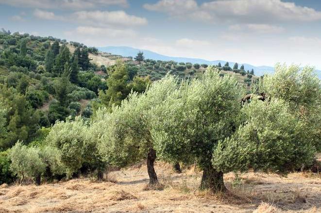 Μέχρι 28 Μαρτίου αιτήσεις για ένταξη στη βιολογική καλλιέργεια