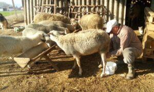 Μπούζα: Ανάγκη στήριξης του κλάδου της αιγοπροβατοτροφίας και τυροκομίας