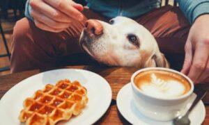 Υπάρχει μία καφετέρια που μπορείς να πιεις τον καφέ σου και να υιοθετήσεις ένα σκύλο