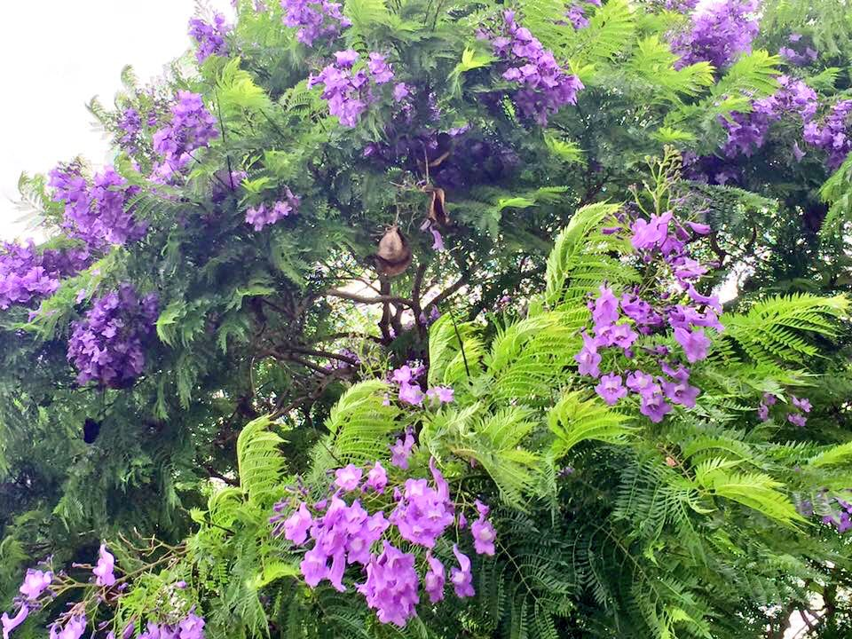 Έρχονται νέες φυτεύσεις δέντρων στην Καλαμάτα