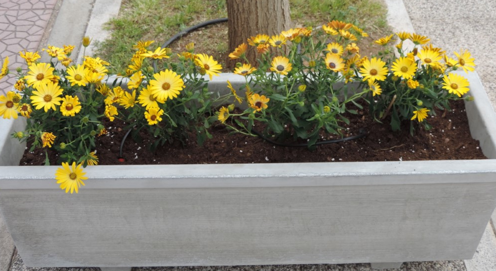 Ζαρντινιέρες με λουλούδια μπήκαν στη Ναυαρίνου