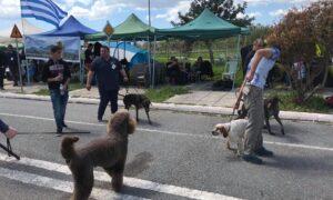 Mε επιτυχία και 200 συμμετοχές ξεκίνησε η Έκθεση Μορφολογίας Σκύλων